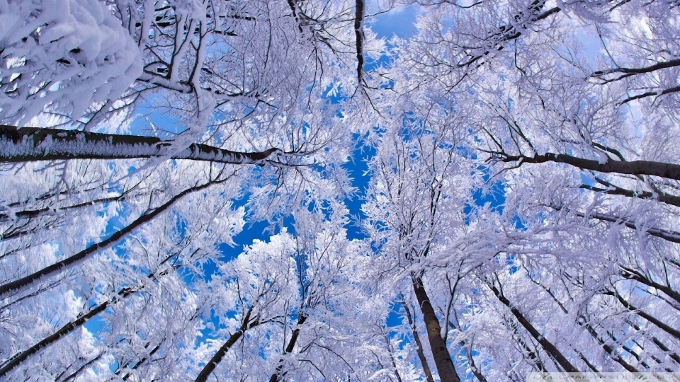 looking_up_through_trees_winter-wallpaper-960x540